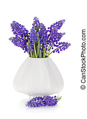 Blue hyacinth flowers in a vase. Isolated on white ...