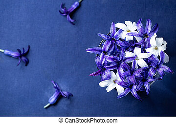 Blue hyacinth flowers over blue background