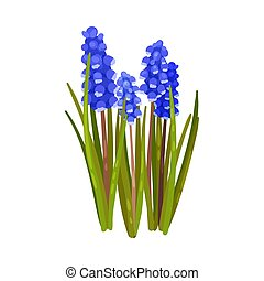Blue hyacinths. Vector illustration on a white background.