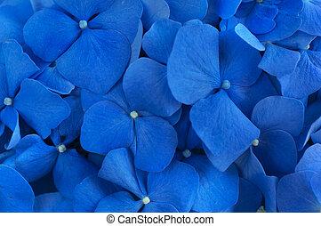Blue Hydrangea background. Hortensia flowers surface. Macro photo.