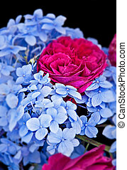 Blue Hydrangea Flowers and Bright Pink Roses