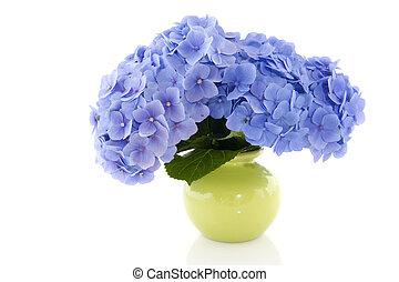 Blue Hydrangea in vase - Blue Hydrangea flowers in green...