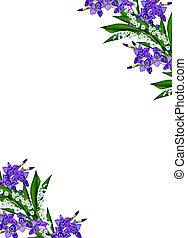 Blue iris flower isolated on white background