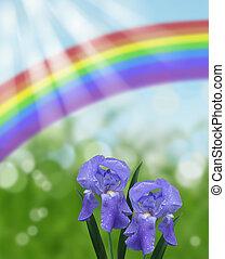 blue iris with rainbow and sun rays