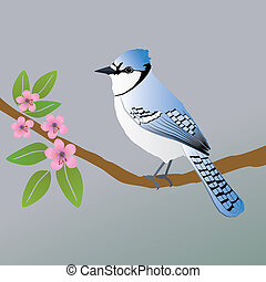 Blue jay - A vector illustration of a blue jay. He is...