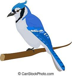 Blue jay bird. Isolated on white background. - Blue cartoon...