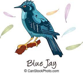 Blue Jay, Color Illustration