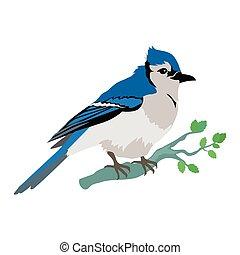 Blue Jay Flat Design Vector Illustration - Blue jay vector....
