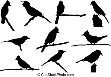 Blue jay Silhouette vector illustration