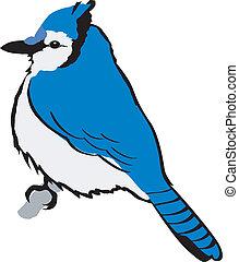 jay clipart and stock illustrations 349 jay vector eps rh canstockphoto com blue jay mascot clipart toronto blue jay clipart