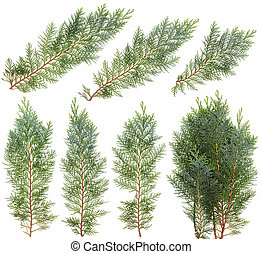 Blue juniper branches isolated set