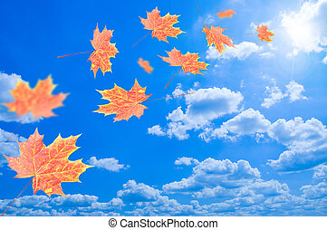 blue kilépő, repülés, ég, ellen, ősz