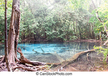 Blue lake in deep forest