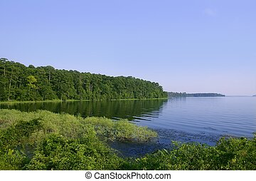 Blue lake landscape in a green Texas forest view, nature