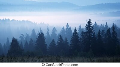 Sea of mist obscures the forested landscape of the Ukrainian Carpathian Mountains in the dawn hours.