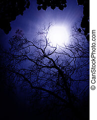 Blue Light - Trees silhouettes by the blue light of the sun