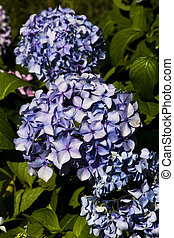 blue lilac background
