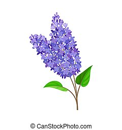 Blue lilac. Vector illustration on a white background.