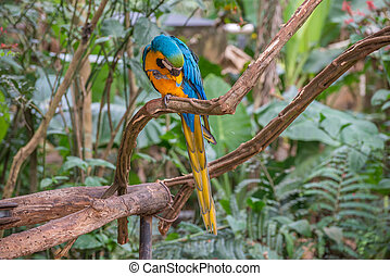 Blue macaw parrots bird on a tree branch
