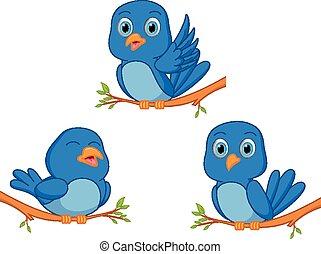 blue madár, karikatúra