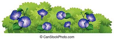 Blue morning glory flowers in green bush illustration