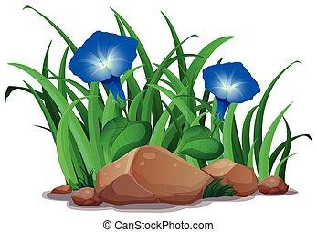 Blue morning glory in the garden illustration