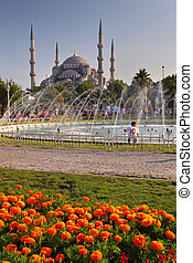 Blue Mosque with flower - Istanbul