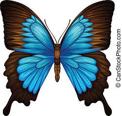Blue Mountain Swallowtail - Illustration of a Blue Mountain...
