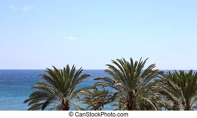 Blue ocean with many palms