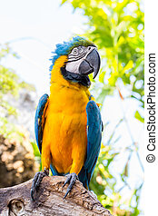 Blue parrot macaw