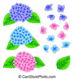 Blue, Pink and Purple Hydrangea Flower isolated on White Background. Vector Illustration