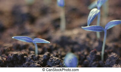 Blue plants growing. Futuristic surreal background....