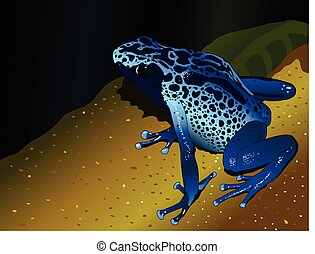 Blue poison dart frog - Dendrobates-pumilio on dark blue...