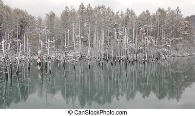 Blue pond - Late autumn of snowy blue pond on dead trees in...