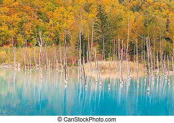 Blue pond water lake during autumn season