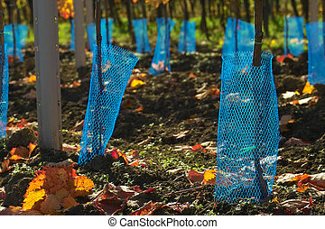 extreme close-up of the blue protection net for young wine grapes