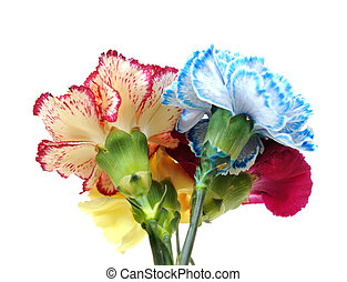 blue, purple, yellow, red carnation isolated on white background