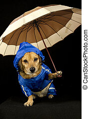 rain dog  - blue rain dog and umbrella