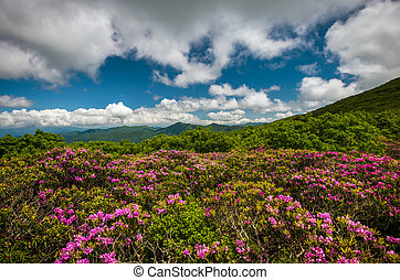 Blue Ridge Mountains North Carolina Scenic Spring Flowers Landscape Photography