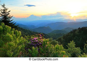 Blue Ridge Parkway And Rhododendron