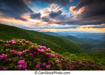 Blue Ridge Parkway Asheville North Carolina Scenic Summer Flowers Mountain Landscape Photography