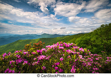 Blue Ridge Parkway North Carolina Mountain Spring Flowers Scenic Landscape Photography
