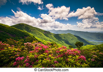 Blue Ridge Parkway North Carolina Scenic Summer Flowers Mountain Landscape Photography