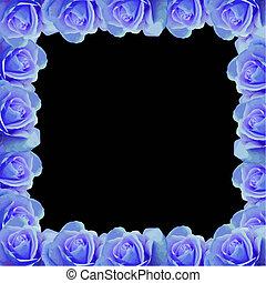 blue rose border vector