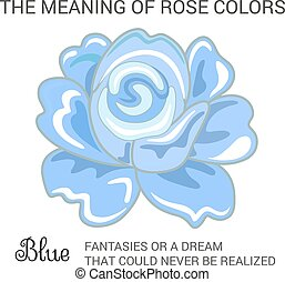 Blue rose infographics, vector illustration isolated on...