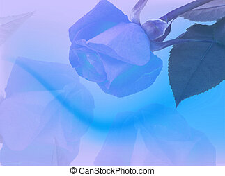 Blue roses backdrop
