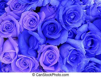 blue roses background