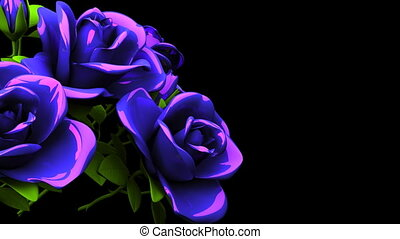 Blue Roses Bouquet On Black Text Space. Loop able 3DCG...