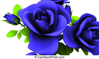 Blue Roses Bouquet On White Background. Loop able 3DCG...