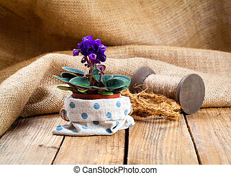 blue Saintpaulias flowers in paper packaging, on sackcloth, wooden background